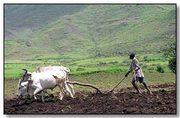 Thumb_ethiopia-farm