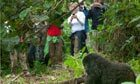 Thumb_virunga-national-park-004