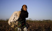 Thumb_cotton-picker-009