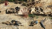 Thumb_mass-grave-discovered-in-eastern-syria-suspected-to-hold-bodies-of-230-al-shitaat-tribesmen-body-image-1418905855