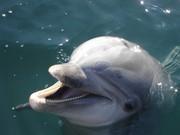 Thumb_dolphin
