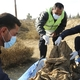 Syria: Hundreds of bodies exhumed from mass grave in Raqqa | Syria News | Al Jazeera